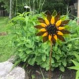 Fun Night Out Sunflower On A Stake