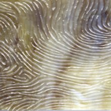 Kokomo Brown, Amber and White Opalescent Vertigo Textured Art Glass